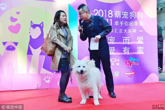 """上海一商场举行""""带着狗狗来相亲""""活动,用宠物增进了解/视觉中国"""