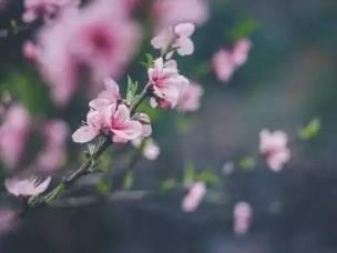 温岭这个地方 满足你对春天的所有幻想