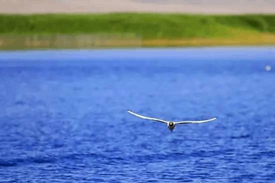 航拍新疆博斯腾湖,美的就是这么任性!