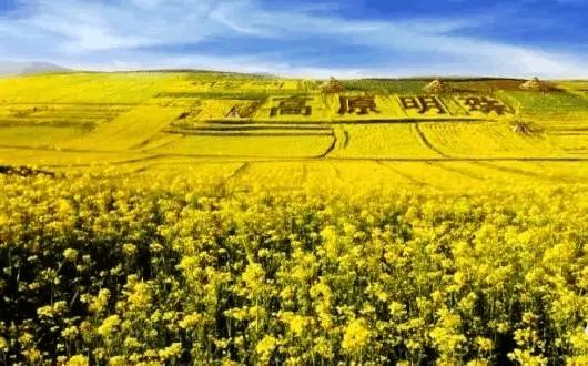七月,金色的甘南,金色的拉扑楞寺!