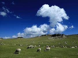 新疆焉耆县霍拉山草原风光旖旎醉游人