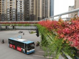 长沙三年造绿 城区46座人行天桥和立交桥绿化全覆盖