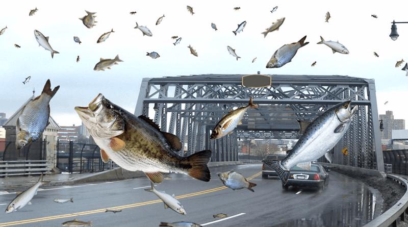 天上真的会下动物雨吗?最爱下的是鱼类和青蛙!