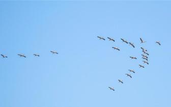 那拉提国家湿地公园飞来热带珍稀鸟类