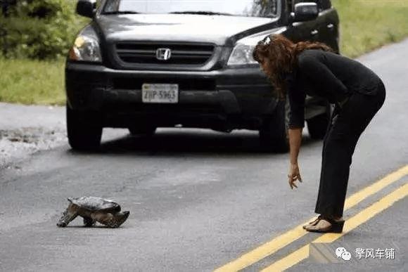 高速上撞上了小动物 我们要怎么办?要不要报警?