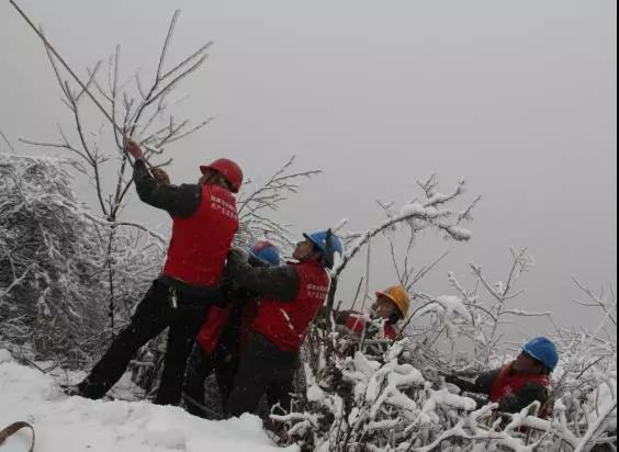 下雪天 供电员工在竹林里练成了一套刀法