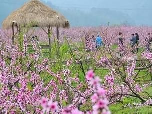 浙江深藏11处绝美花海 撑起了整个春天的颜值