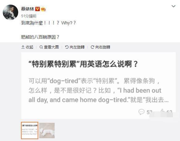 蔡依林幽默解释爱犬躺在地上原因 网友:长知识了
