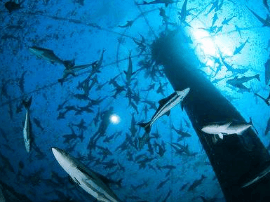 世界首座!青岛成功研发大型智能化深海渔场