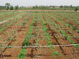 东营新增13个省级农业标准化生产基地