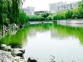 用玻璃取代石材地板 文瀛公园新添清水观鱼景观