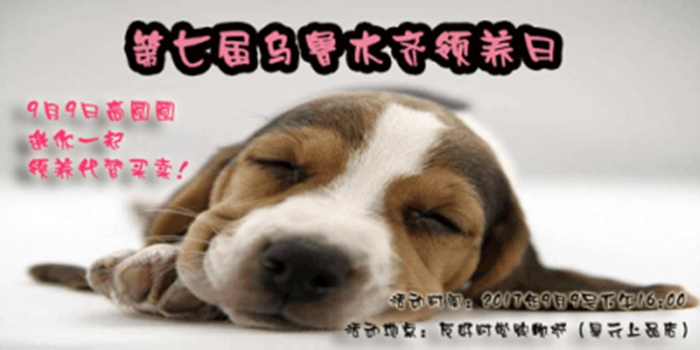 直播 | 第七届乌鲁木齐动物领养日