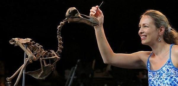 世界保存完整渡渡鸟骨架 40年拼成价值440万