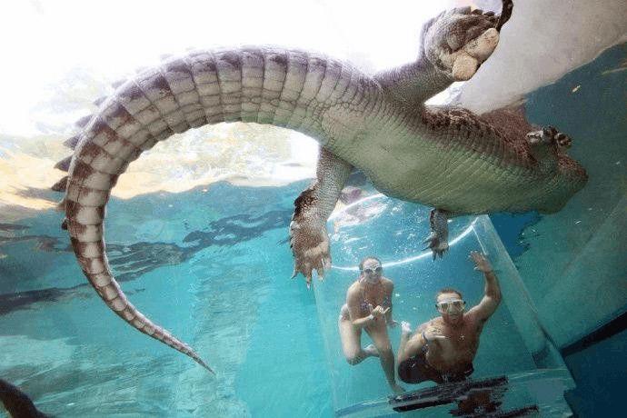 """达尔文鳄鱼湾公园""""死亡之笼""""胆肥的可以去试试"""