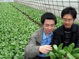 肃宁成国家支持农民工返乡创业试点县