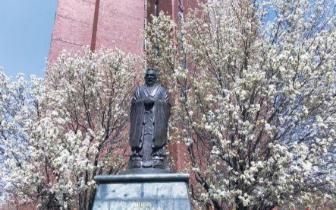 纽约华埠樱花迎春风 引游人争相拍照