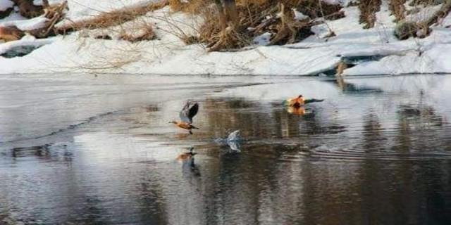 天池水暖鸭先知