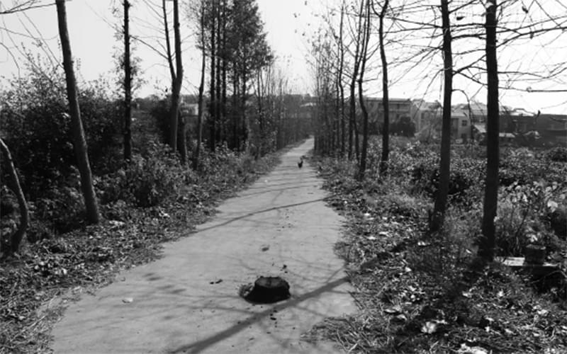村庄里的路