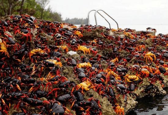 别去古澳吃螃蟹和三文鱼了!