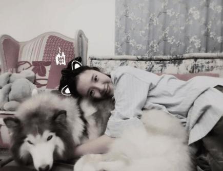 唐艺昕和大狗合照自夸脸小 网友发现狗是张若昀的