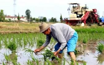 每月400元 防城港农民也将可能领到退休金!