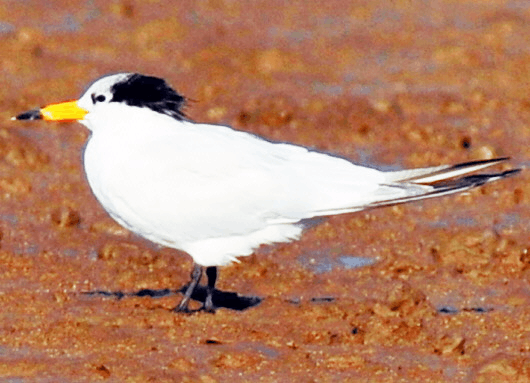 青岛境内现有鸟类达393种 陆生动物430种