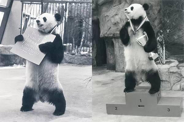 【图】传奇谢幕!这只国人都熟悉的大熊猫走了