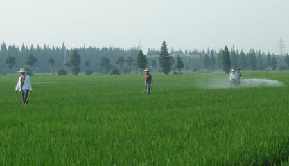 运城市长陈振亮芮城调研小麦病虫害防治工作