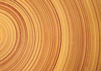 科学家研发出超级木材 硬过钢铁还能挡子弹!