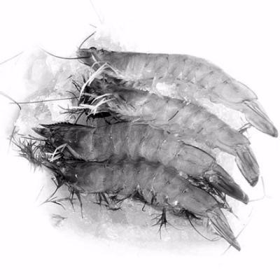美食新知:冷冻海鲜怎样选?