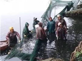 小编推贱:冬天来了景观湖里的鱼咋整?这所广东高校竟然!