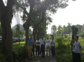 市园林中心领导现场研究树木整形修剪