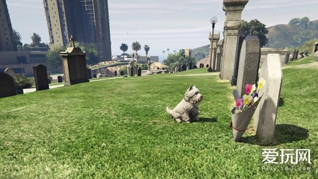 08:GTA5的一枚彩蛋:一只独自前来扫墓的小狗,结合OL任务中此地的大开杀戒,恰似R星的枪炮与玫瑰