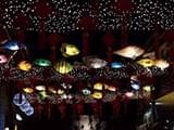 听大戏、逛灯会……宁波首份元宵节地图来了!