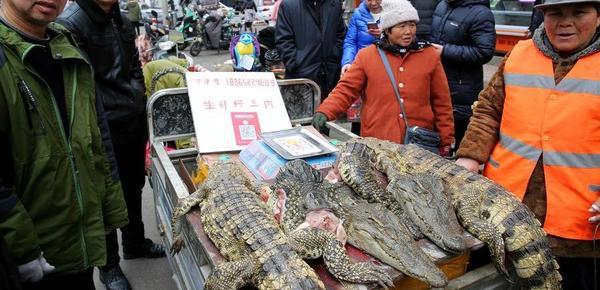 重口味!市场卖鳄鱼肉 80元一斤