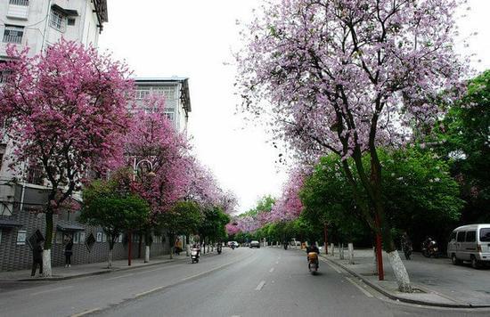 中国最干净 10 座城市一半是三线城市