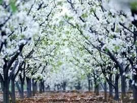 最强台州赏花攻略,趁着天气好一起出发吧