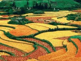 """去看看贵州这些""""美到窒息""""的秋色!"""