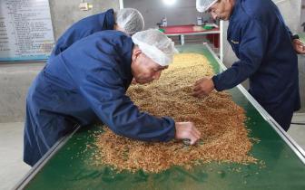 山西汾西县特色扶贫产品黄粉虫走出国门