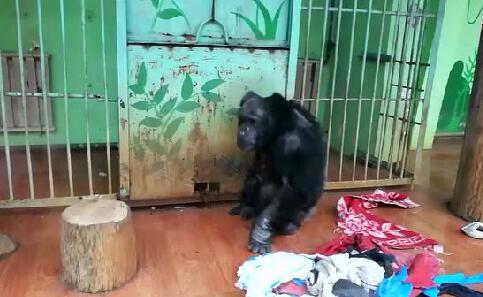 """四九天,荆州动物园的宝贝们保暖有""""神器""""……"""