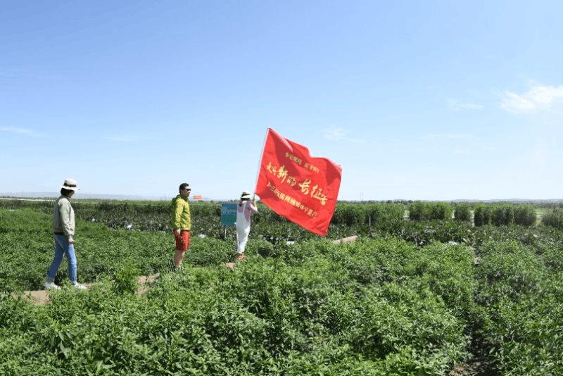彭堡镇万亩冷凉蔬菜基地,为农民打开脱贫致富大门