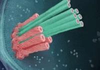 细菌自带弹簧匕首,从内部刺穿阿米巴虫