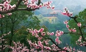 一场与桃花的约会 阳山半程马拉松报名开始