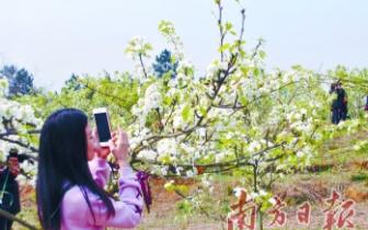 第二届阳山县黎埠镇梨花旅游文化节开幕