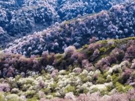"""神奇苇子峡:隐居天山的""""桃花源"""""""