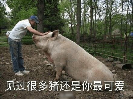 每日轻松一刻12月18日:见过很多猪,还是你最可爱!