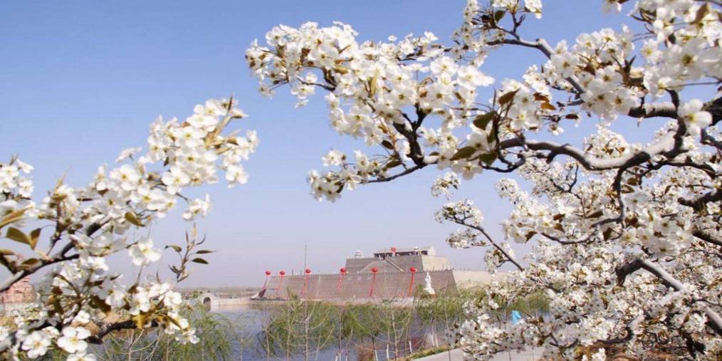 4月1日至7日到邯郸魏县看梨花了