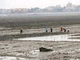 粤通报去年为官不为十案例:数千亩滩涂被霸占20年