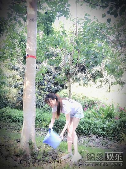 金莎为菩提树浇水 网友猜测心愿是早日脱单