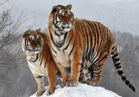 东北虎豹国家公园国有自然资源资产管理局今成立